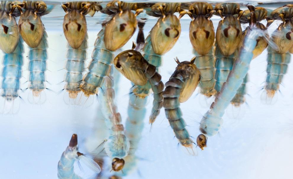 Estes 10 parasitas superperigosos podem estar em sua comida