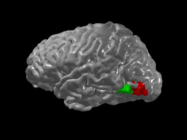 Sentir o cheiro de cores pode ser uma vantagem evolutiva 157422493252