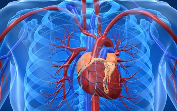 Pensamento positivo ajuda a manter o coração saudável