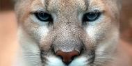 Mountain Lion: nova versão do Mac OS X traz recursos do iOS