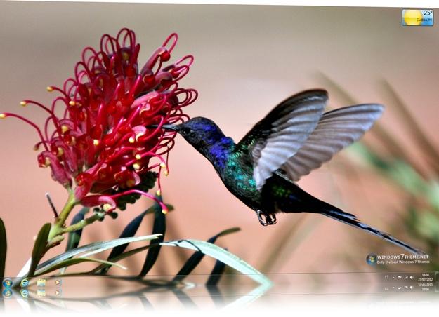 Hummingbird Windows 7 Theme.