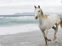 White Horses Windows 7 Theme.