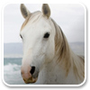 White Horses Windows 7 Theme 1.0