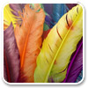 Colorful Feathers Windows 7 Theme