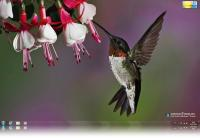 Hummingbird Windows 7 Theme.