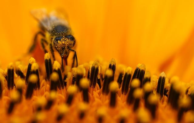 Curiosidades sobre abelhas