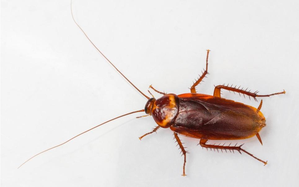 Na China, criadores de baratas estão lucrando com os insetos asquerosos