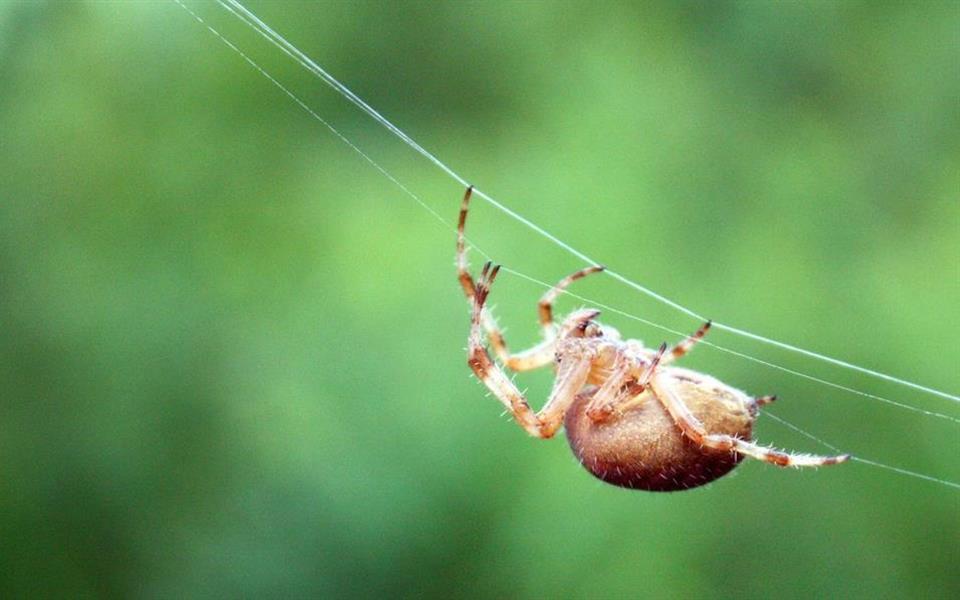 As 11 aranhas mais perigosas e venenosas do mundo