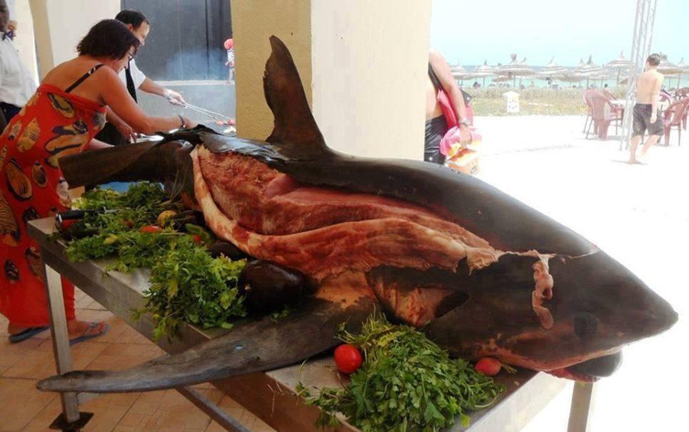 Imagem de tubarão servido inteiro em resort gera polêmica