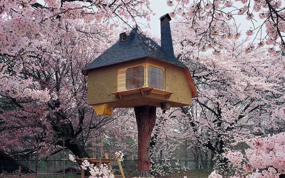 As 10 casas na árvore mais incríveis que você já viu [galeria]