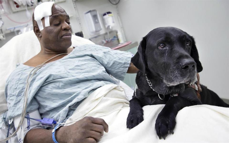Cão-guia salva a vida de seu dono cego nos trilhos do metrô de Nova York
