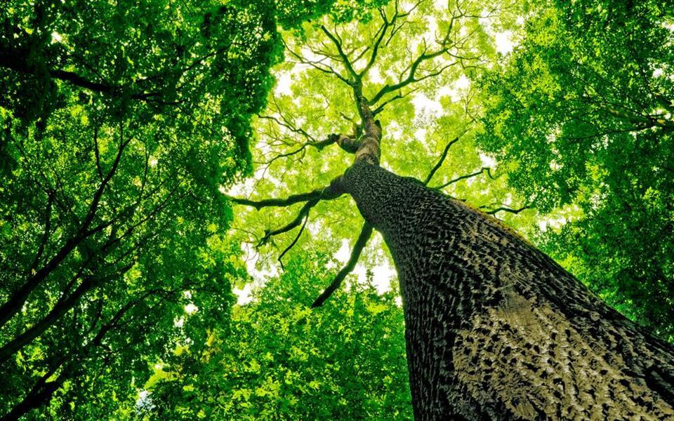 Pesquisadores descobrem que estruturas vegetais são rígidas como o aço