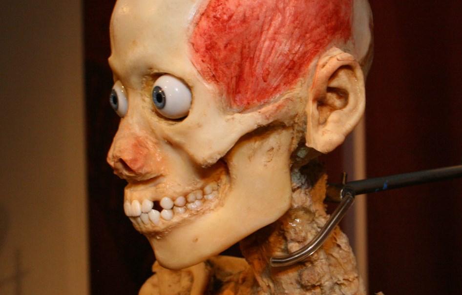 5 fatos curiosos sobre os seus órgãos