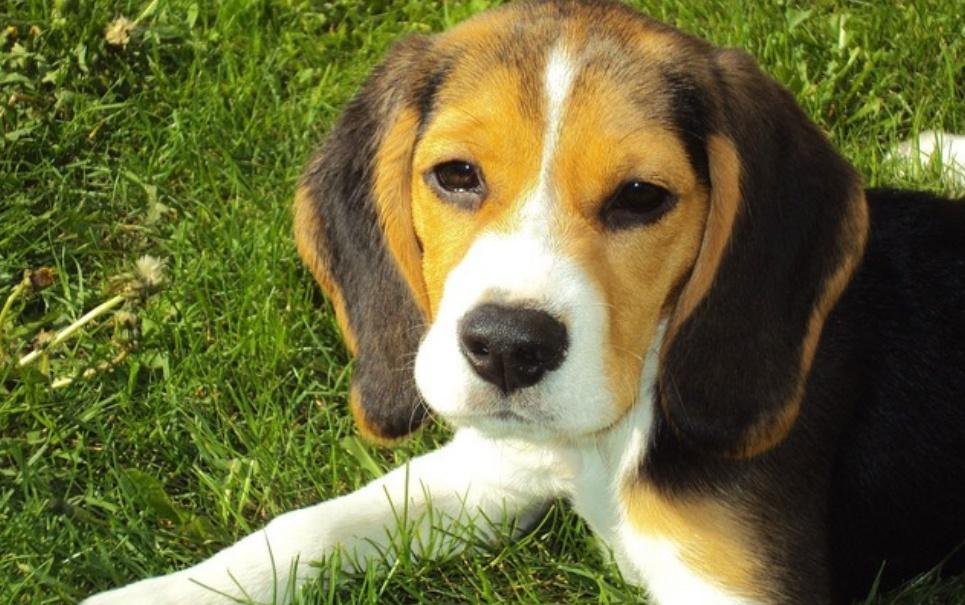 7 fatos sobre cachorros que você provavelmente ainda não conhecia