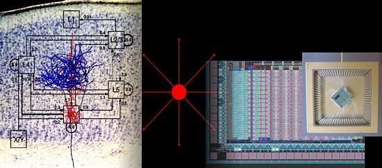 Chips neuromórficos podem simular neurônios do cérebro humano