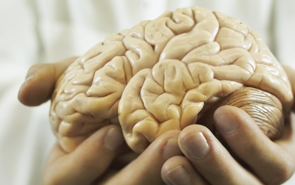 4 mitos sobre o cérebro humano