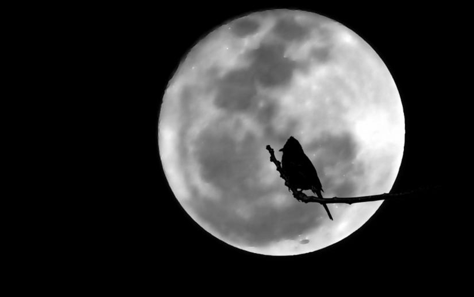 De que forma a Lua afeta o comportamento dos animais?