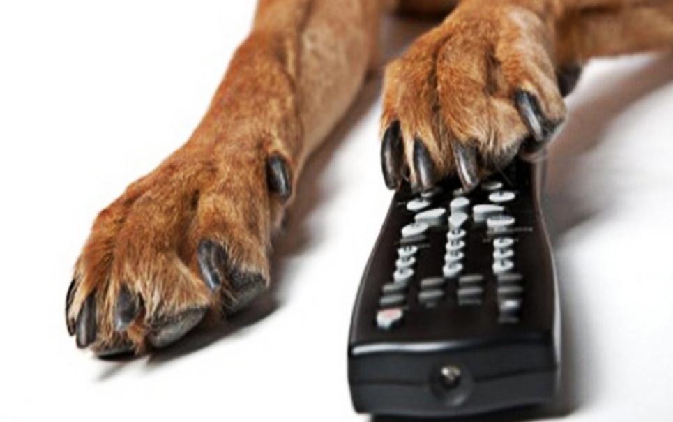 Veja o comercial de ração para cachorros mais incrível de todos os tempos