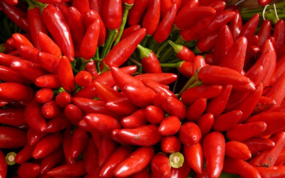 Por que seu nariz fica escorrendo quando você come pimenta?