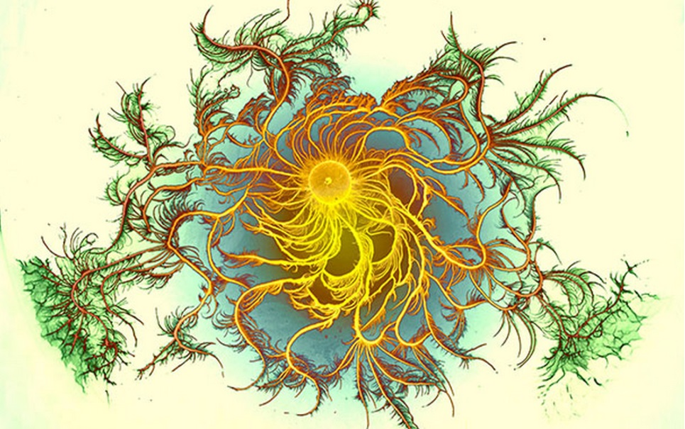 Colônias de bactérias se transformam em obras de arte psicodélica