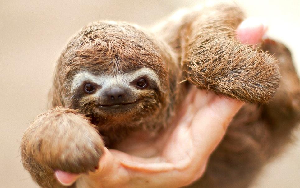 9 motivos para você amar bichos-preguiça [GIFs]