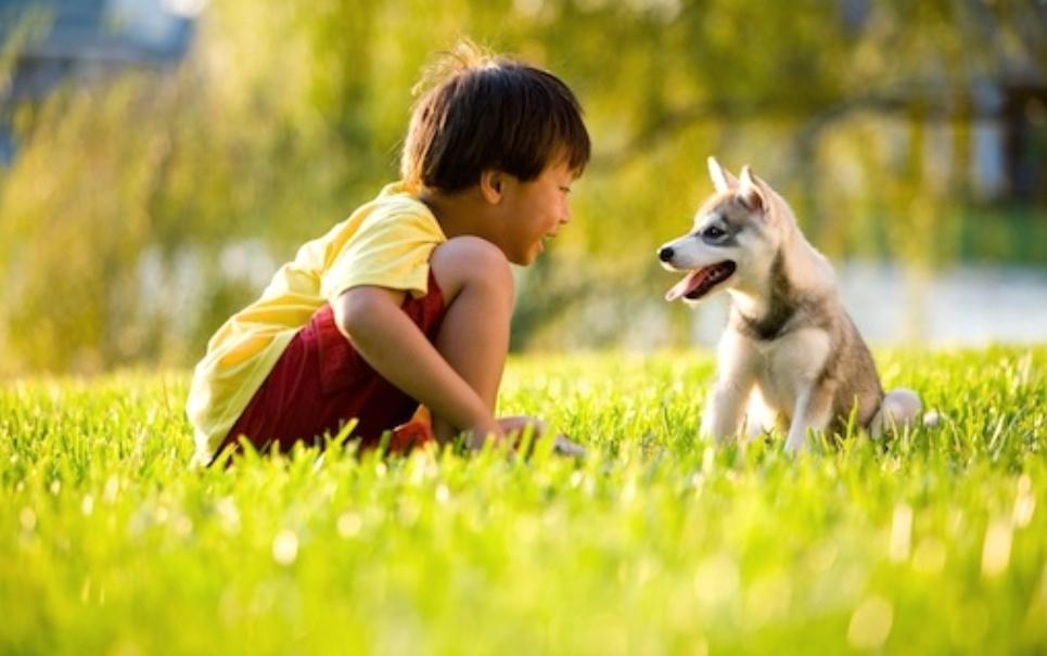 Algumas características que nos tornam animais especiais