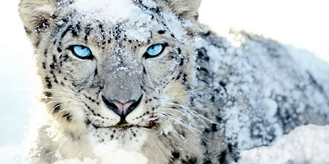 Apple cancela suporte ao Snow Leopard