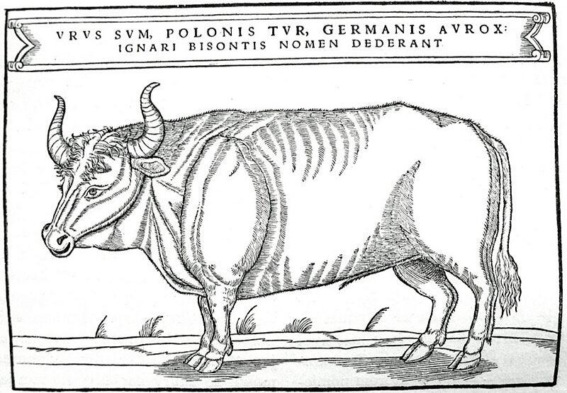 Wikimedia Commons 5