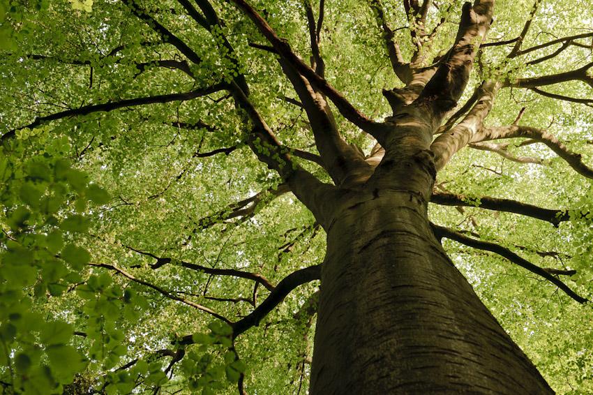 Esta floresta é o cenário perfeito para um conto de fadas [galeria]