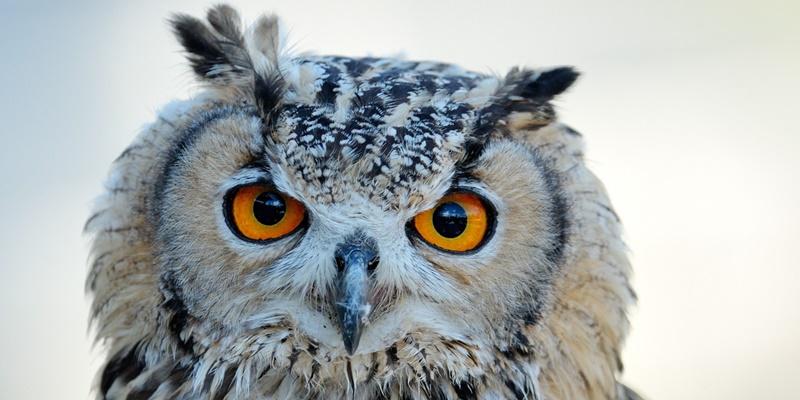 Flirten owl