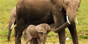18 GIFs de filhotes de elefante se divertindo com suas trombas