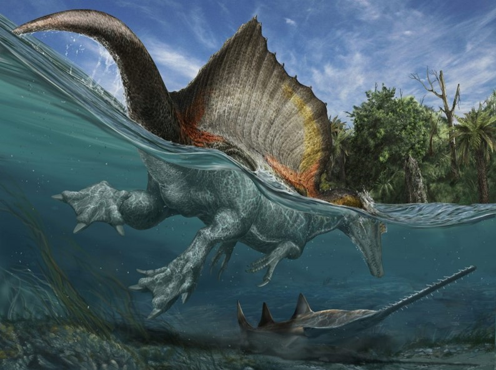 O maior dinossauro carnívoro do mundo foi um misto de crocodilo com pato