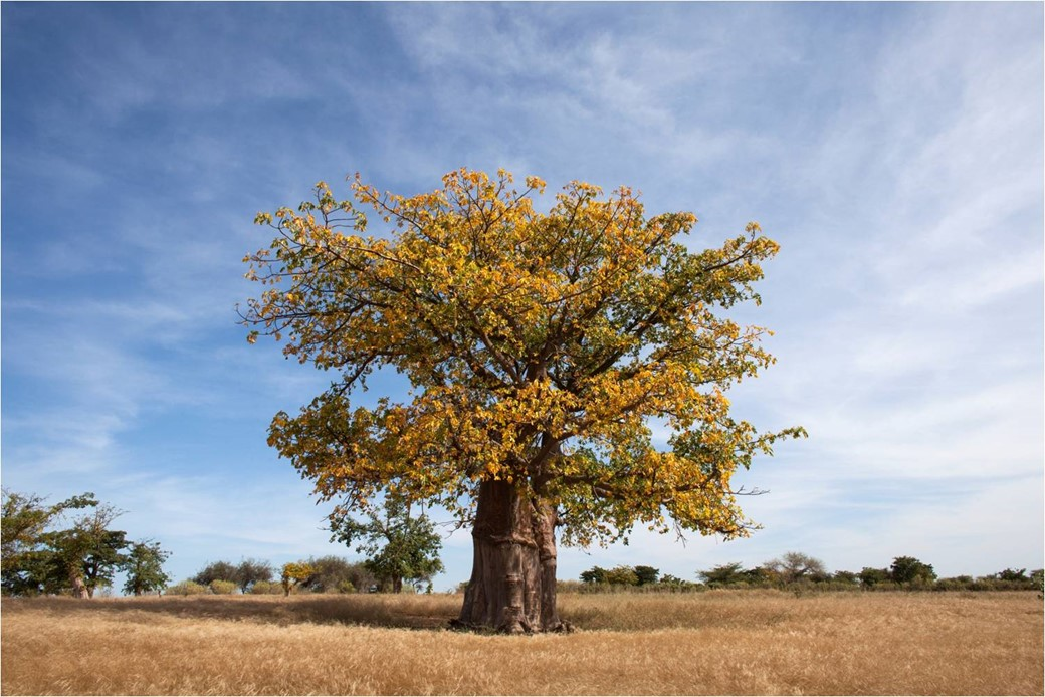 Homem Consegue Fazer Uma Floresta Crescer Em Pleno Deserto Entenda Como Mega Curioso