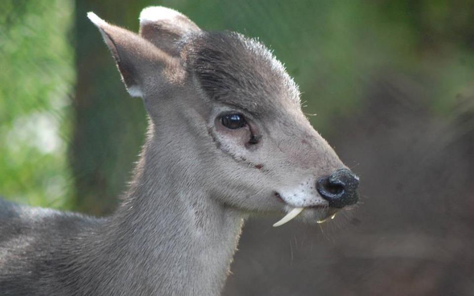 Veja 7 animais bizarros de que você provavelmente nunca ouviu falar