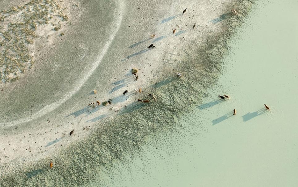 Fotógrafo captura a beleza selvagem de Botswana vista do céu
