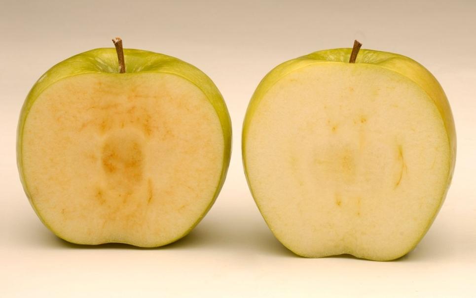 Maçã geneticamente modificada não ganha cor marrom depois de cortada!