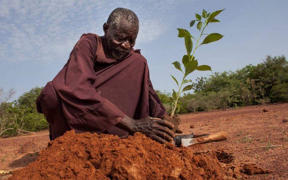 Homem consegue fazer uma floresta crescer em pleno deserto. Entenda como