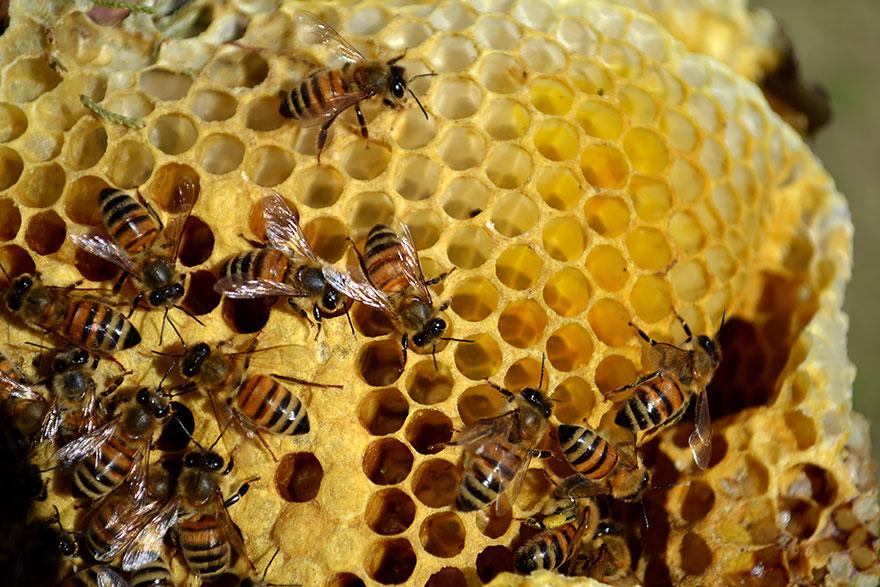 Resultado de imagem para ninho de abelhas arvore