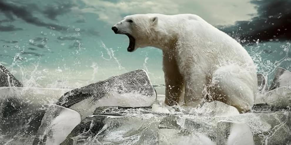 Preocupante: a Terra está passando pelo sexto processo de extinção em massa