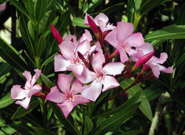 plantas toxicas jardim:10 plantas que você pode ter no jardim sem saber que são letais