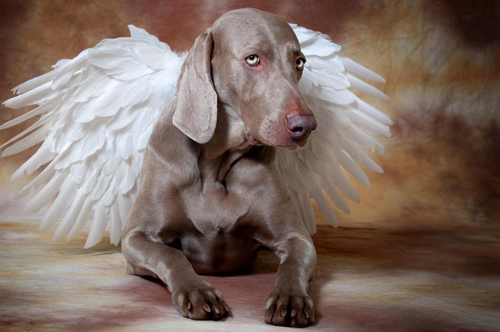 O que algumas religiões dizem sobre o destino dos animais após a morte?