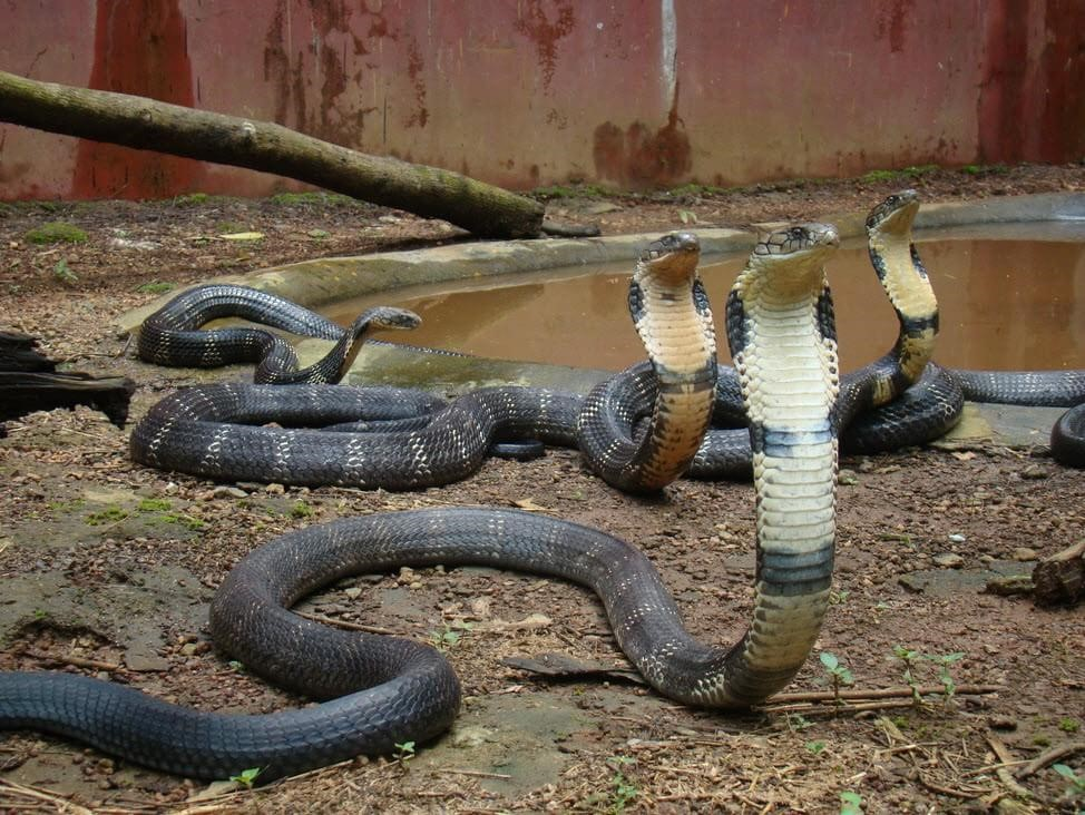 Descubra os 10 animais mais venenosos do mundo - Mega Curioso