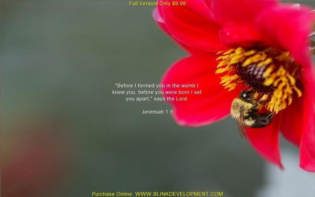 Versículo Bíblico De Proteção: Promises Of God Screensaver Download