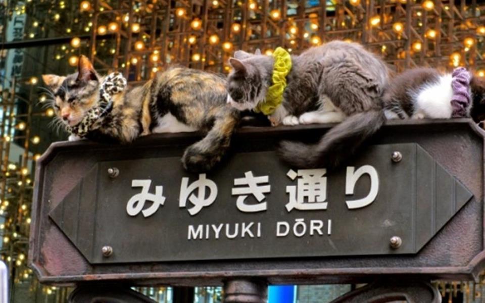 Próxima parada: Japão – entenda os costumes da terra do sol nascente