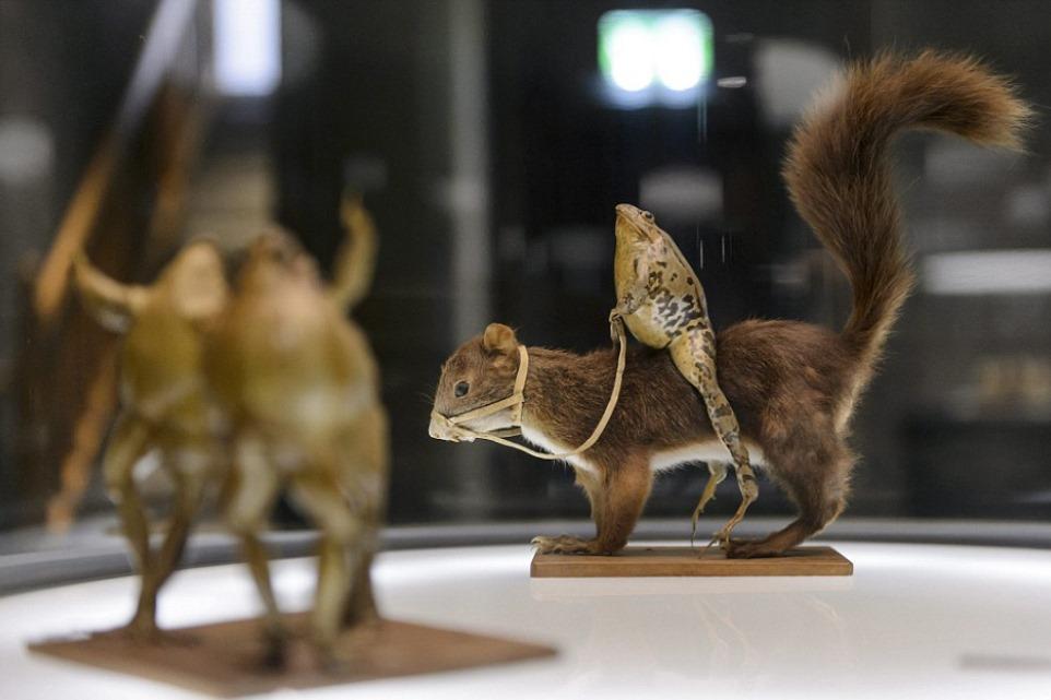 Conheça o exótico Museu dos Sapos, na Suíça [galeria]