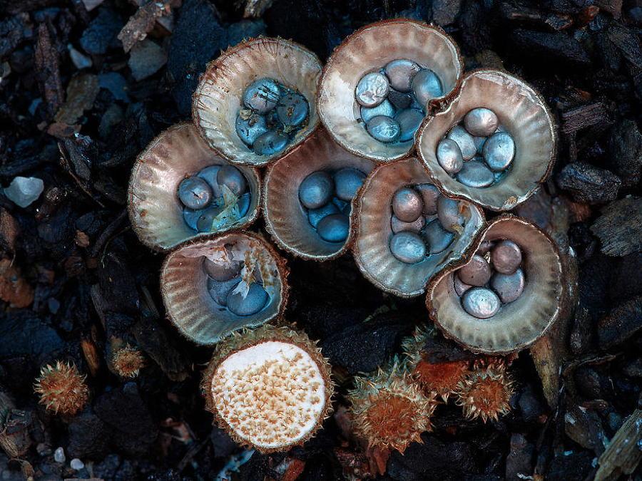 Na verdade como curar um fungo em pregos