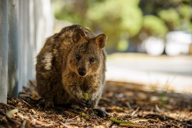 12085418457840 7 de los más bellos y lindos animales que se pueden encontrar en Australia