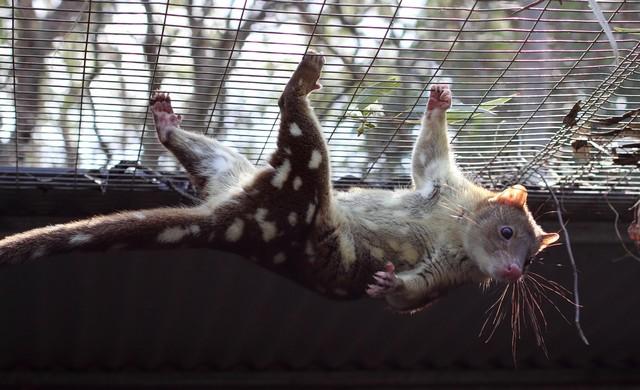 12085547753842 7 de los más bellos y lindos animales que se pueden encontrar en Australia