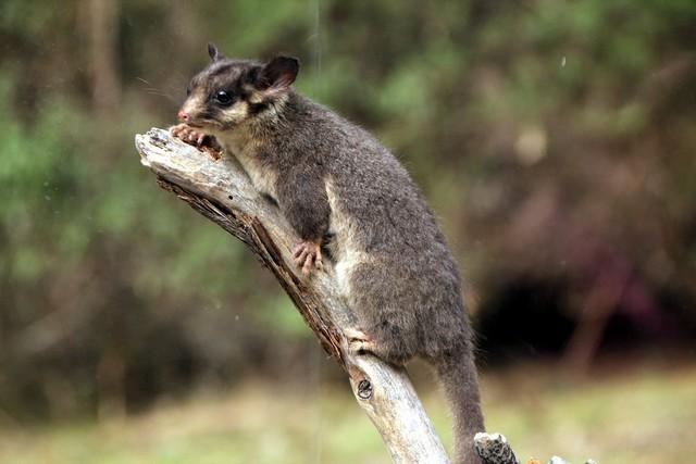 12085644116843 7 de los más bellos y lindos animales que se pueden encontrar en Australia