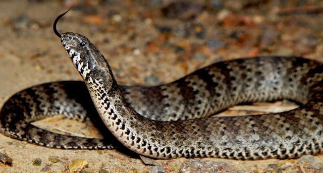 Os 10 animais mais perigosos da Austrália